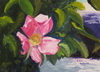 thumbnail of painting Beach Rose Newport