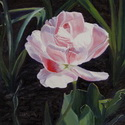 "thumbnail image of painting ""Double Sassy Tulip"""
